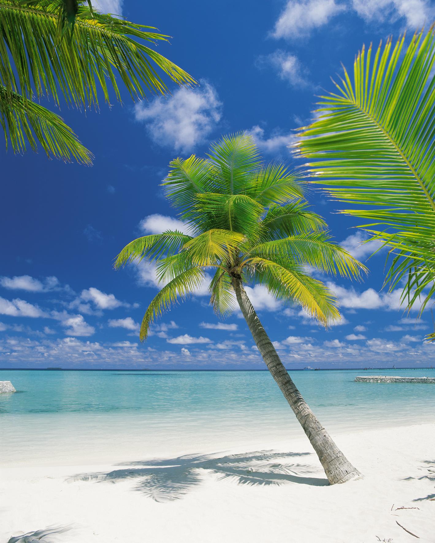 Image of   Air Atoll 304-883