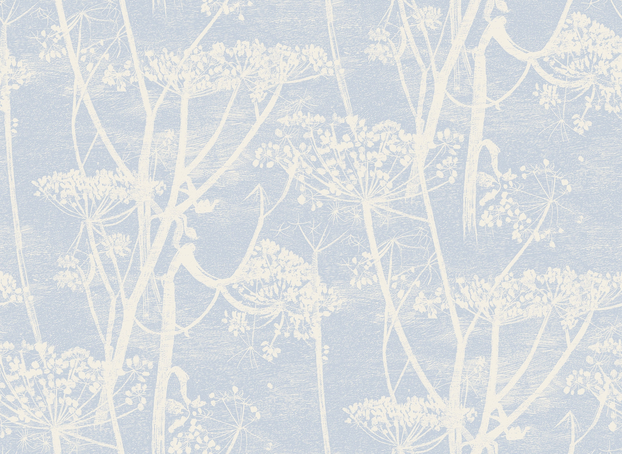 Image of   Cow Parsley - Light Blue