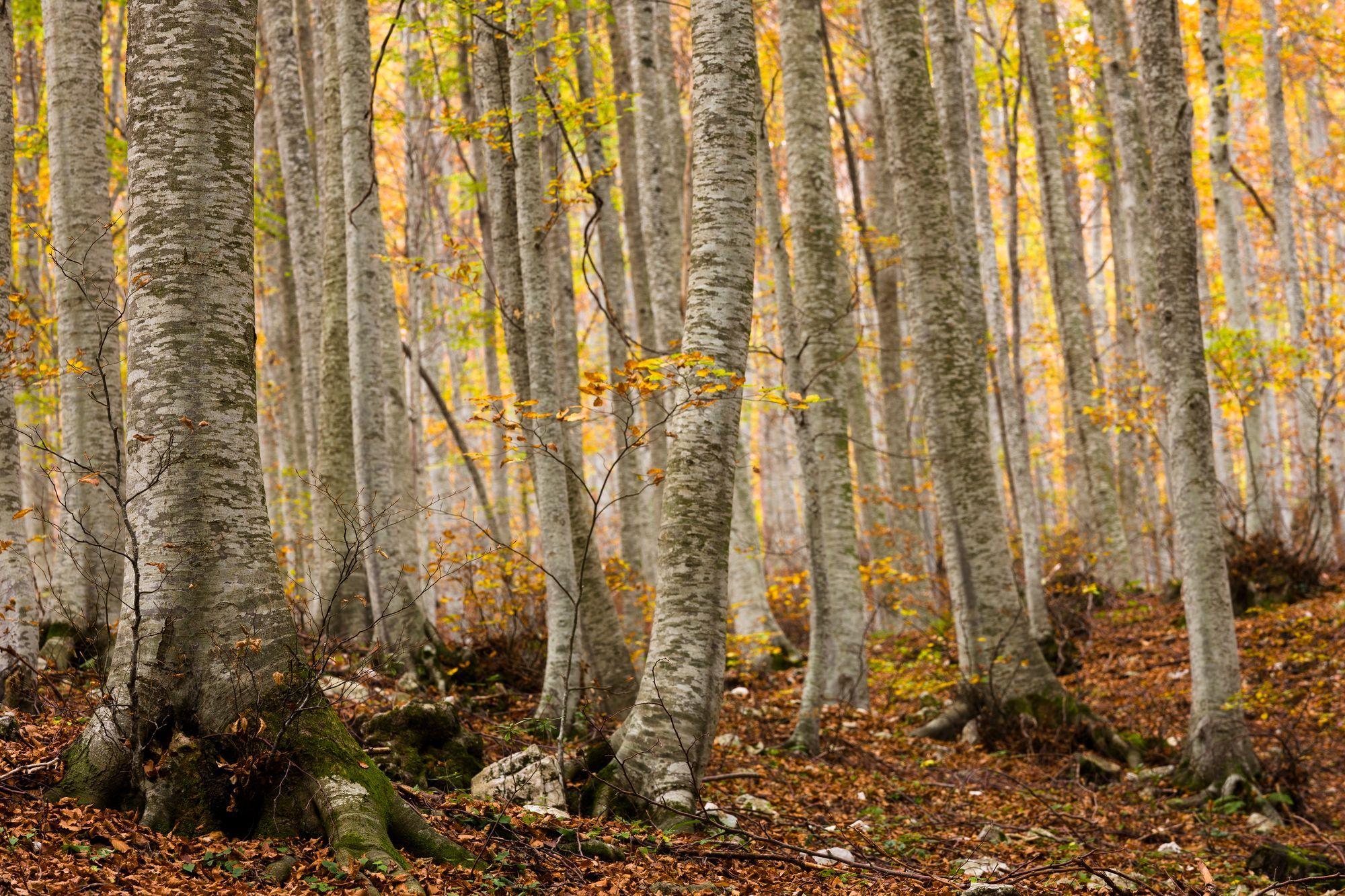 Fototapet skov - Abruzzo