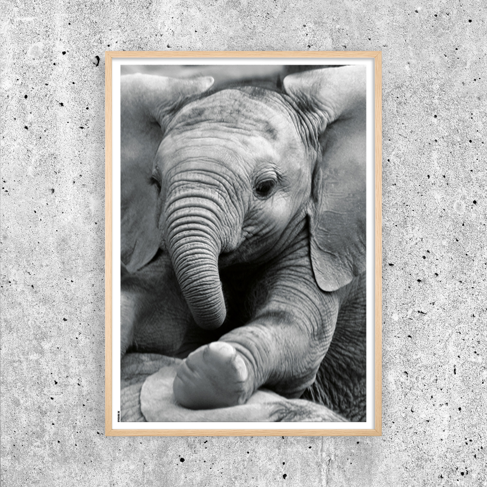 Image of   Baby Elephant