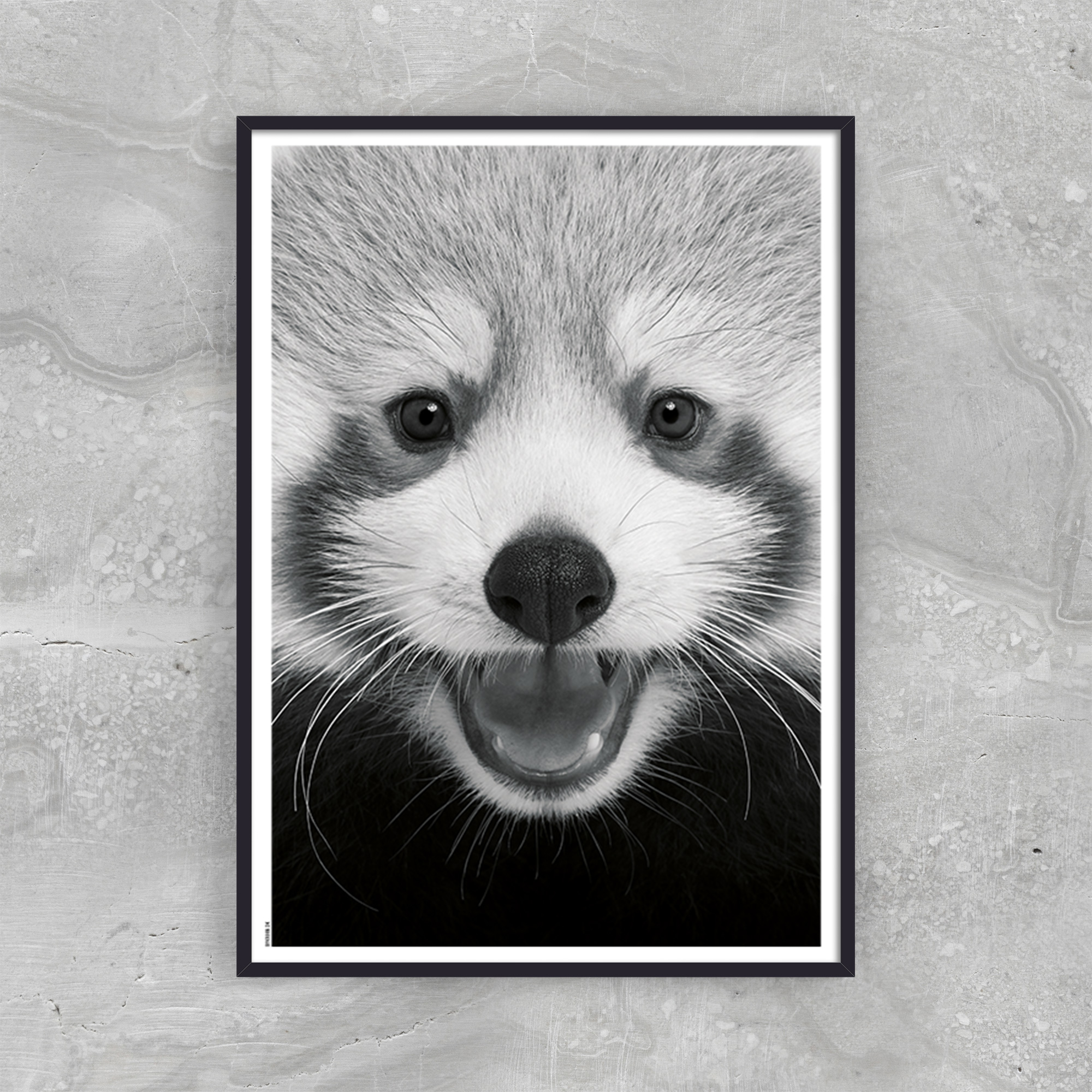 Image of   Baby Red Panda