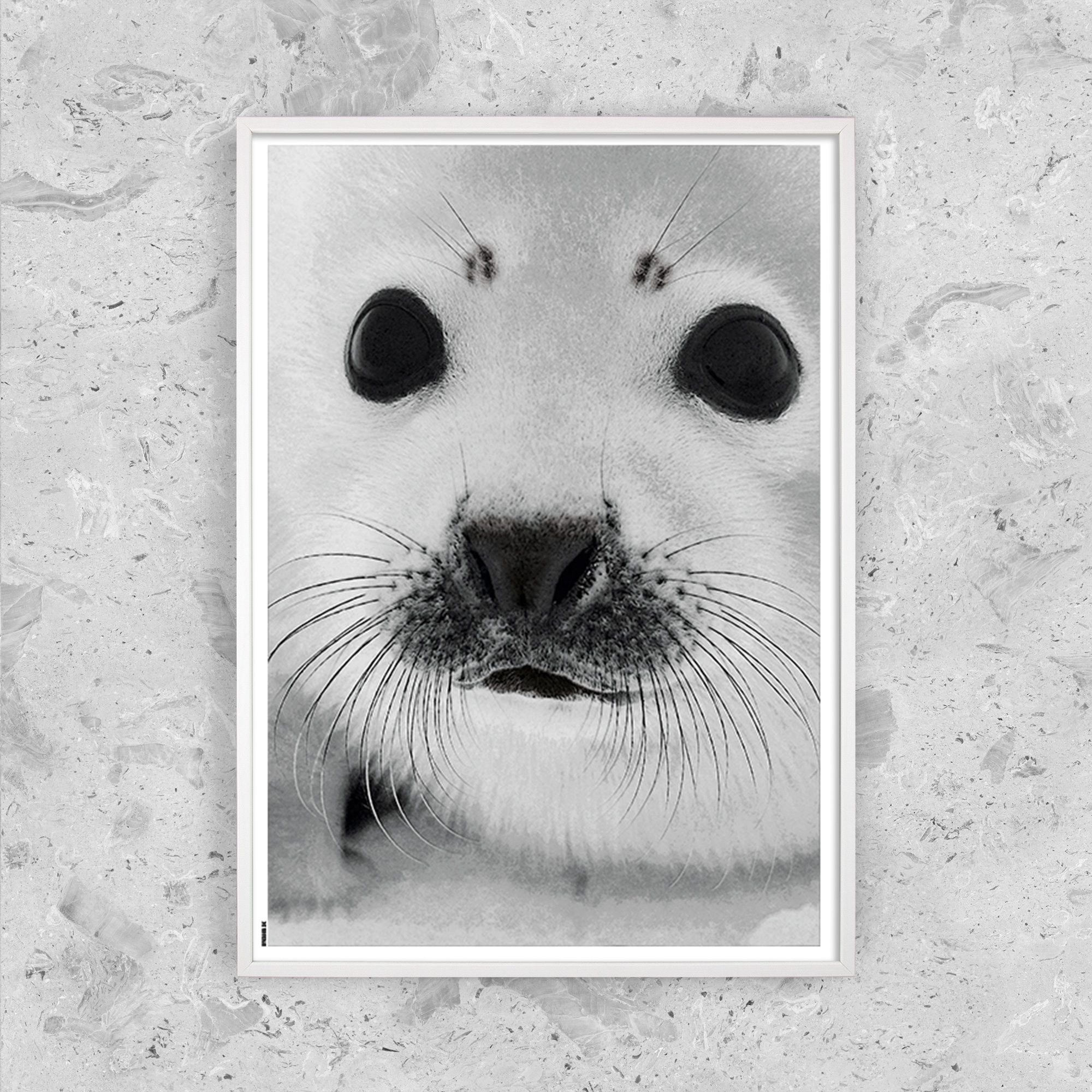 Image of   Baby Seal