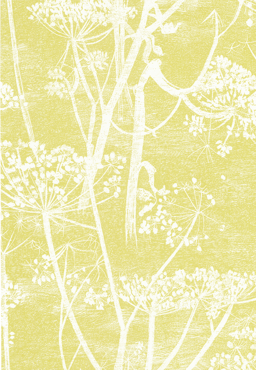Image of   Cow Parsley - Gul