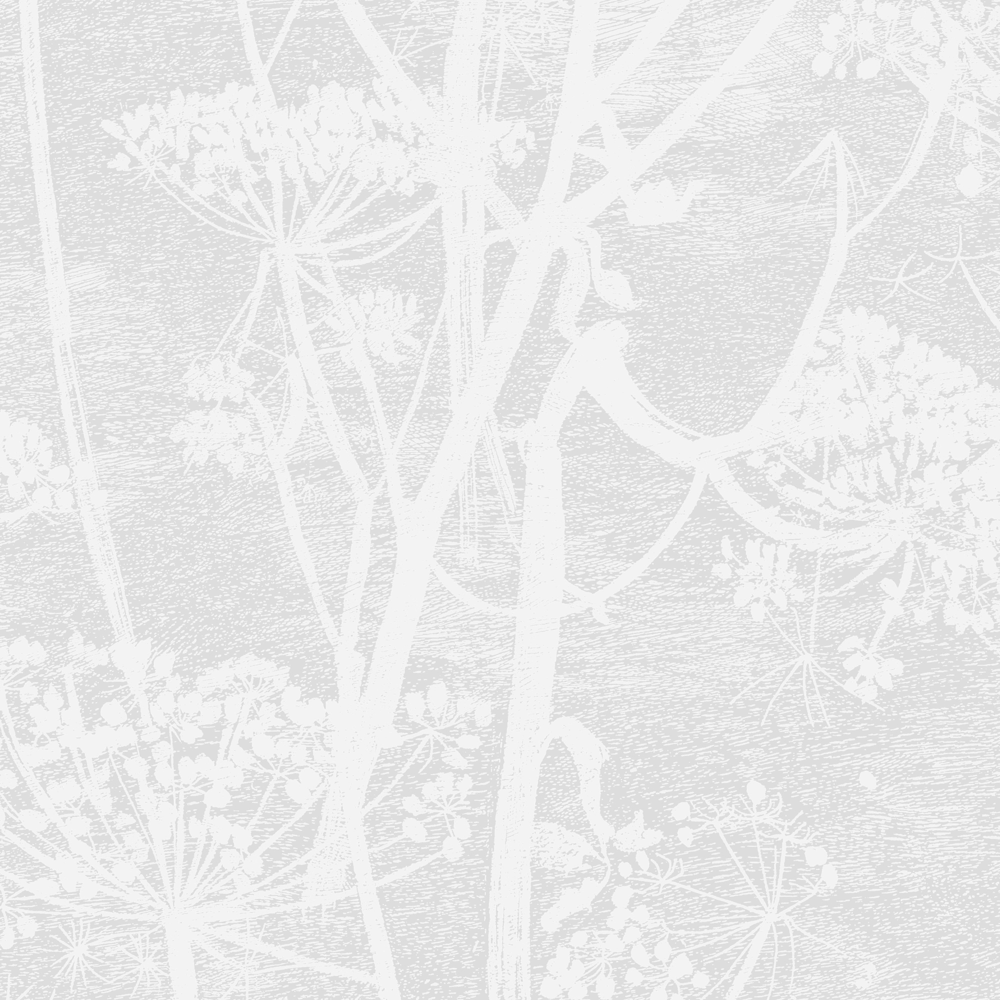 Image of   Cow Parsley - Parchment
