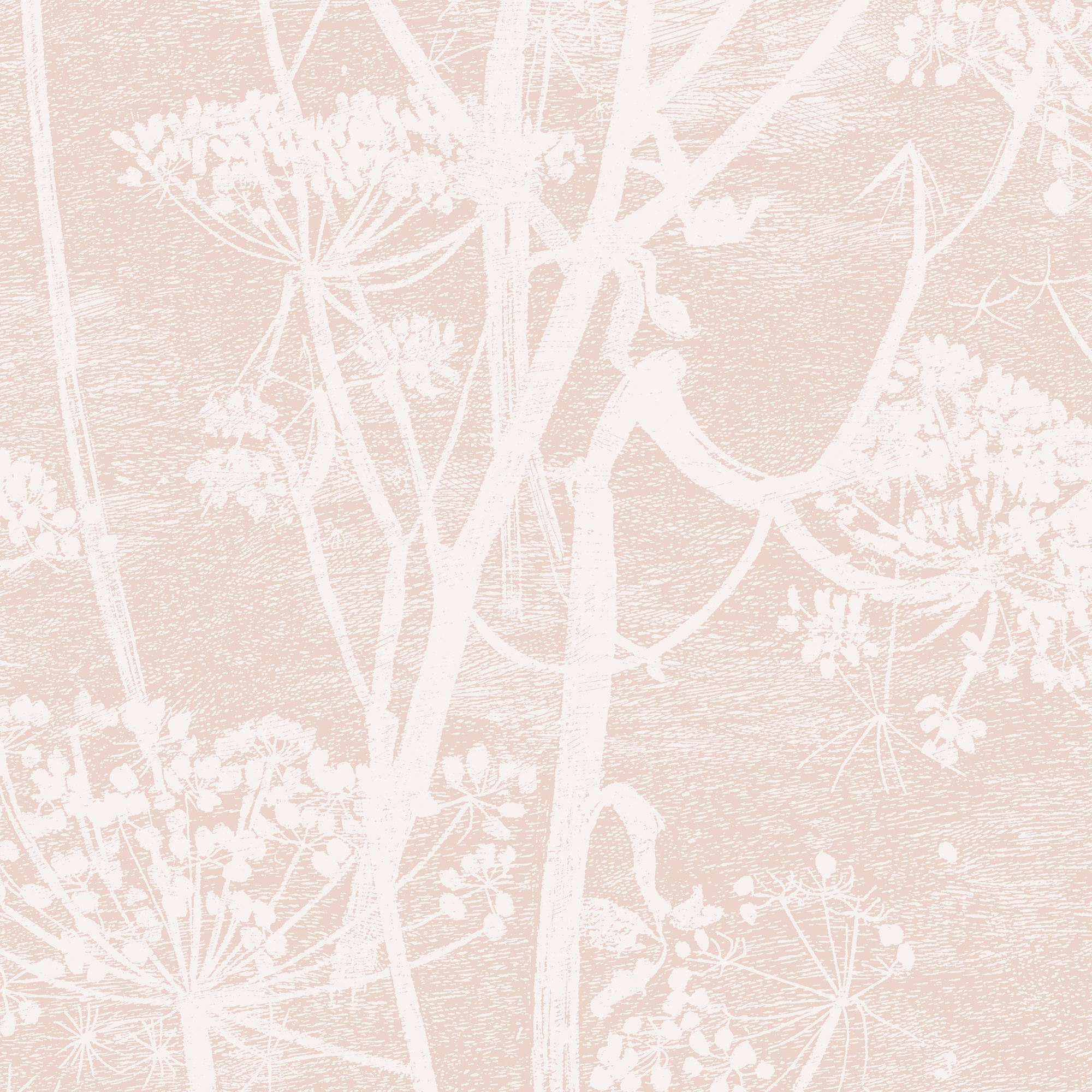 Image of   Cow Parsley - Ballet Slipper