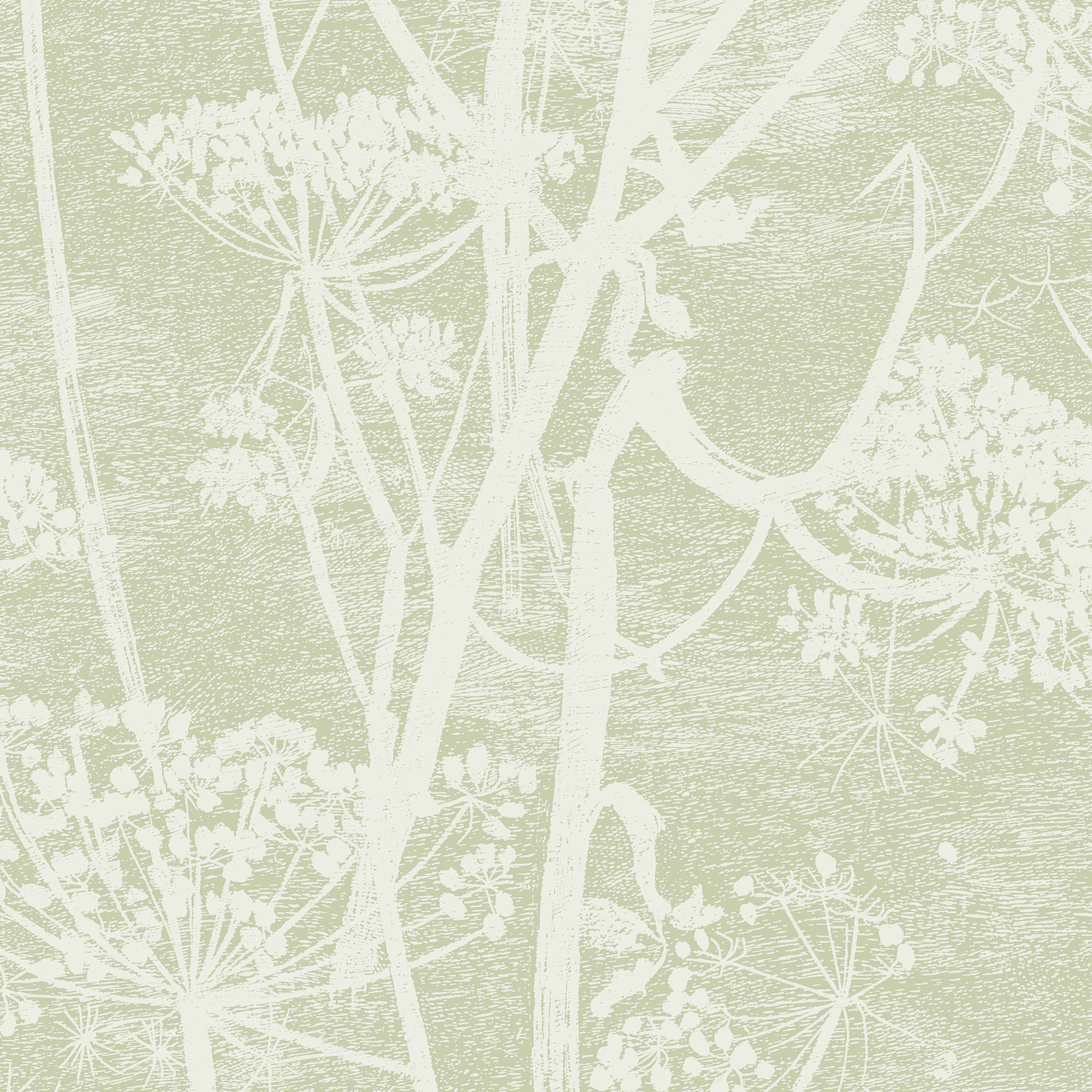 Image of   Cow Parsley - Olive