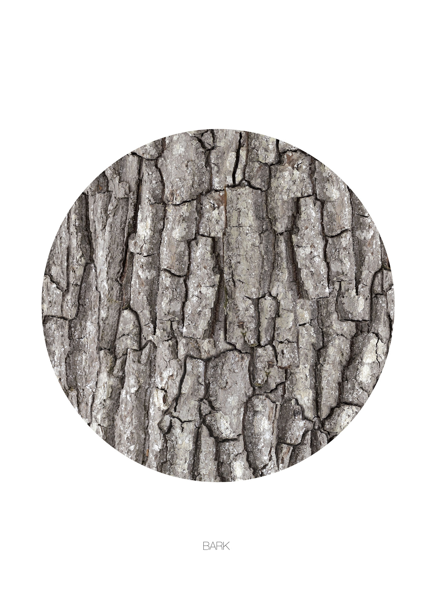 Image of   BARK - CIRCLE-50 x 70