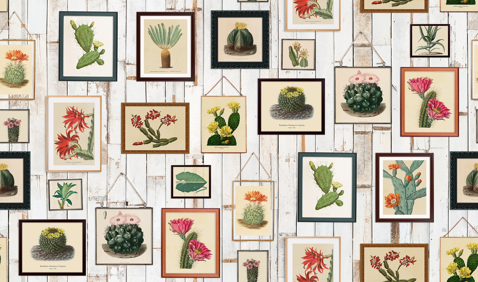 Image of   Cactus Wall Art