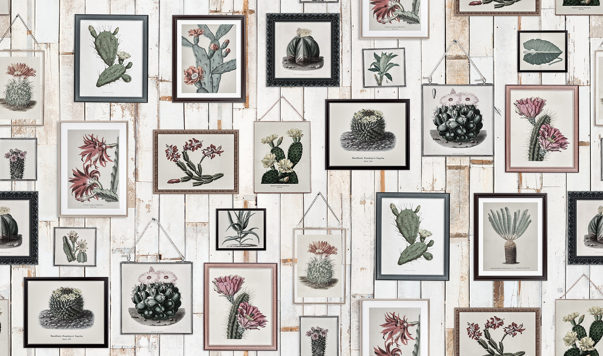 Image of   Cactus Wall Art, Faded
