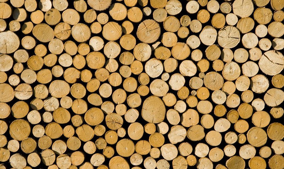 Raw wood - Fototapet træ