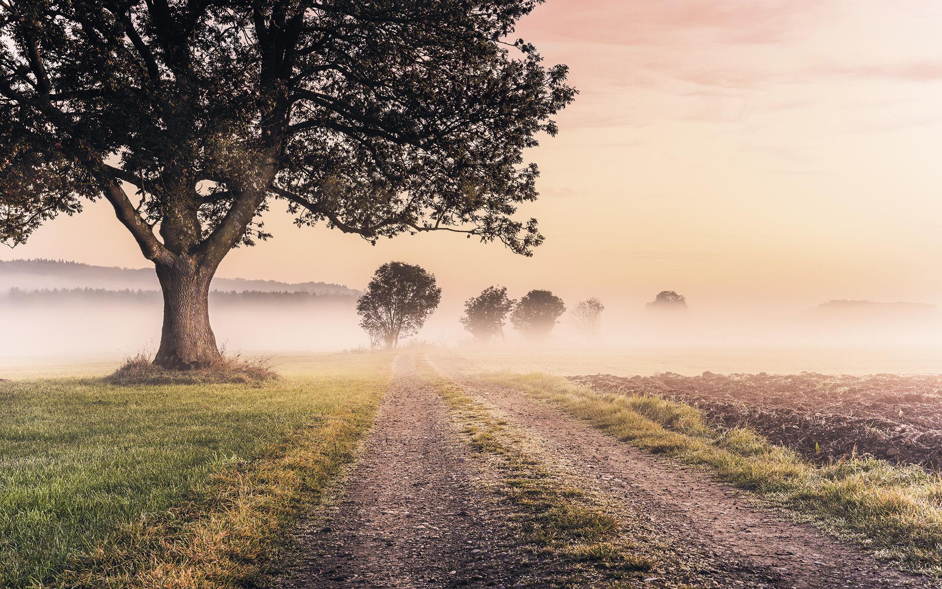 Image of   Misty Morning